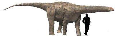 Hypselosaurus.jpg