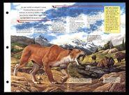 Wildlife fact file Smilodon inside