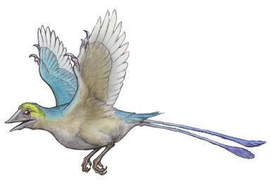 Confusciocornis.jpg