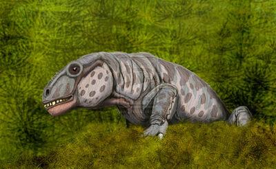Anomocephalus.jpg