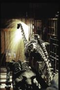 Smithsonian Diplodocus 4