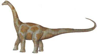 Aepisaurus.jpg