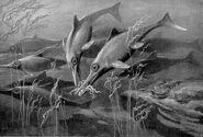 Ichthyosaurs large