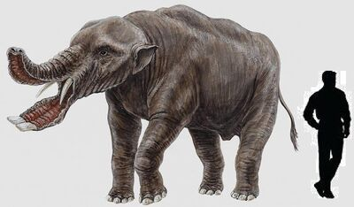 Platybelodon.jpg