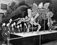 Stegosaurusscouts 1913
