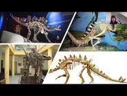 The Stegosaurian Dinosaurs