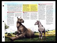 Wildlife fact file Indricotherium inside