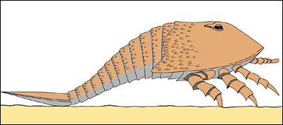 Hibberopterus.jpg
