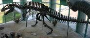 Acrocanthosaurusskeleton