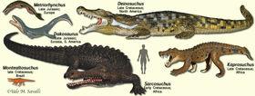 CrocodylomorphModels.jpg