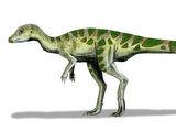 Leallynasaura