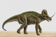 Centrosaurus049