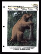 Wildlife fact file Giant Ground Sloth front