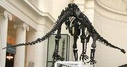 Mamenchisaurus, Field Museum