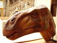 Iguanodon head