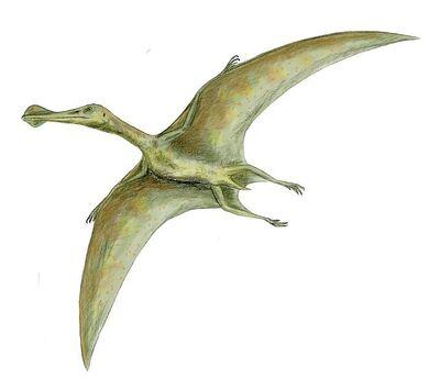Ornithocheirus.jpg