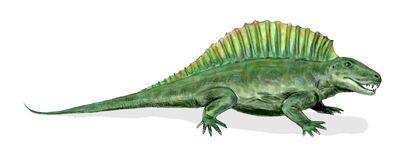 Ctenospondylus.jpg