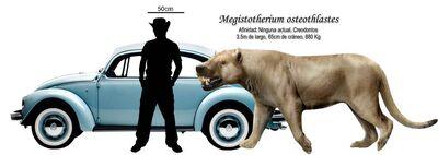 M osteothlastes.jpg