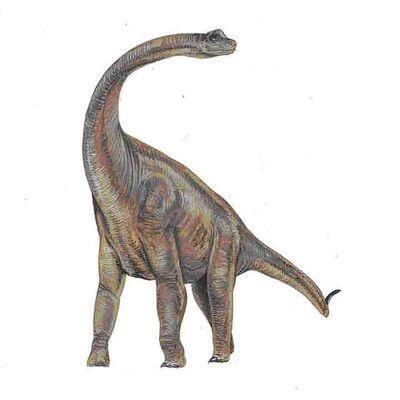 Paluxysaurus.jpg