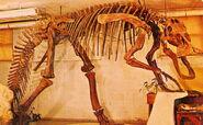Edmontosaurus-skeleton1