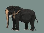 Deinotherium giganteum by Gwyndor