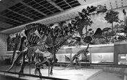Peabodybrontosaurus bw