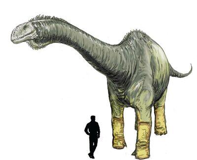 Haplocanthosaurus.jpg
