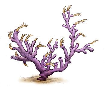Dendrograptus.jpg