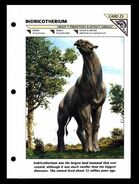 Wildlife fact file Indricotherium front