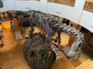 Isla Nublar Tour Alamosaurus Skeleton