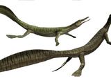 Mesosaurus