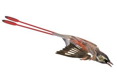 Protopteryx.jpg