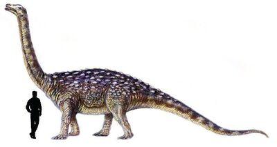 Saltasaurus.jpg