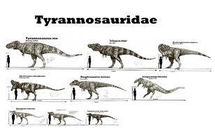Tyrannosauridae.jpg
