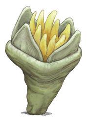 Goniophyllum.jpg