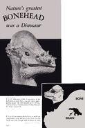 Bonehead! Pachycephalosaurus