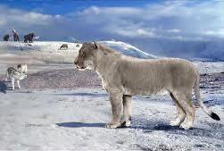 León americano.jpg