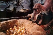 Maiasaura-exhibit-700x462