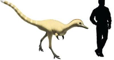 Achillesaurus.jpg