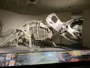 Torosaurus (23547625914)
