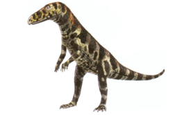 Gracilisuchus 000.png