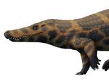 Boverisuchus