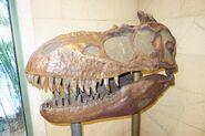 Dino institute tour albertosaurus skull by maastrichiangguy dddzz2y-fullview