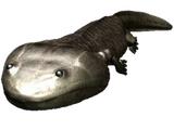Koolasuchus