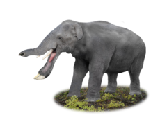 20170717103509!Platybelodon.png