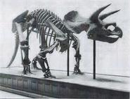 Triceratops 1905.
