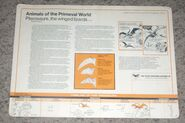 Primeval World Pterodactyl card back