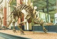 Kentrosaurusberlin