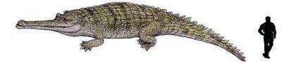 Rhamphosuchus.jpg