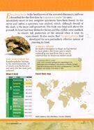 Euoplocephalus Geoworld back